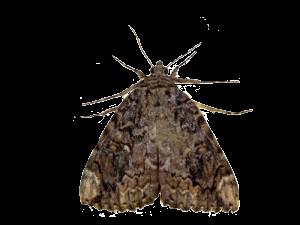 moth-300x225