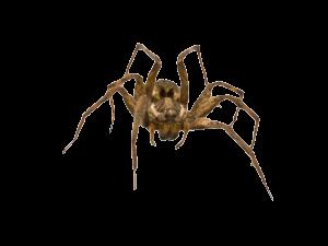 spiders-300x225