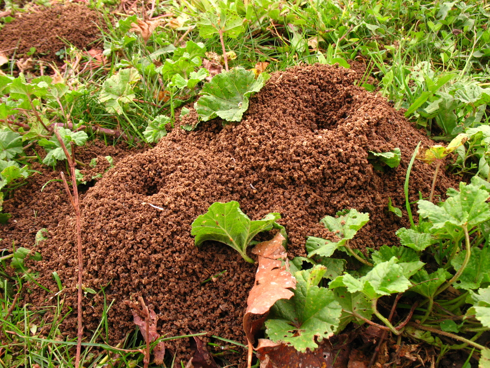 Ants – Possibly One of Summer's Most Annoying Insects - One Man and a Lady Bug - Pest Control in Calgary