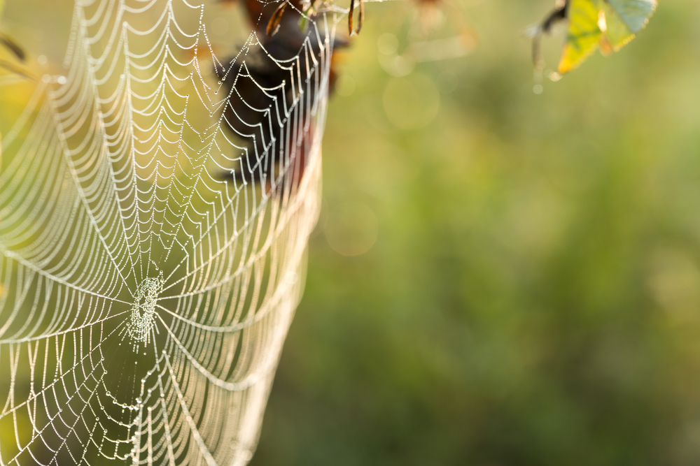 Spiders – Finding Refuge as Temperatures Cool - One Man and a Lady Bug - Pest Control Experts Calgary