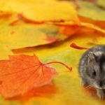 Preventing Mice From Entering Your Home This Fall - One Man and a Lady Bug - Pest Control Calgary