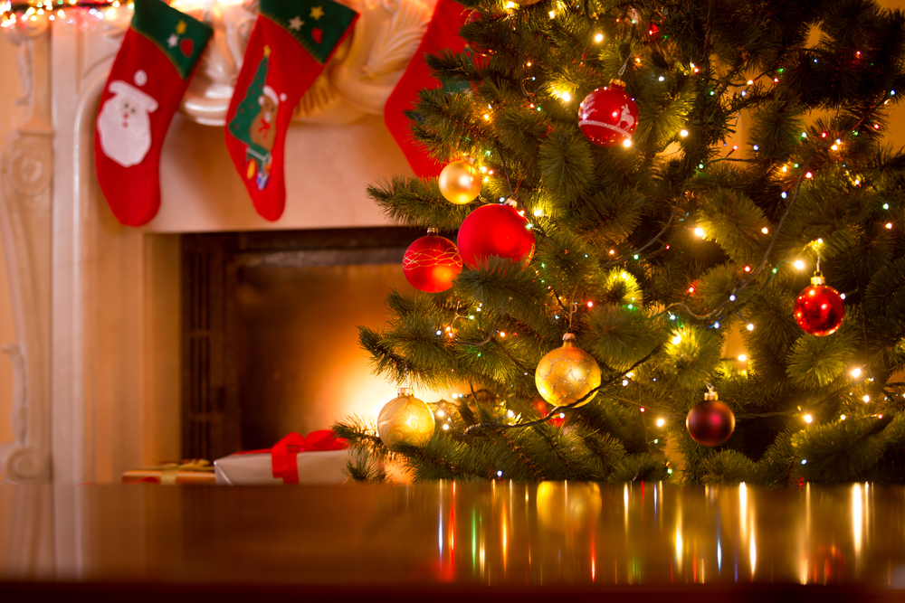 What's Hiding in Your Christmas Tree? - One Man and a Lady Bug - Pest Control Calgary
