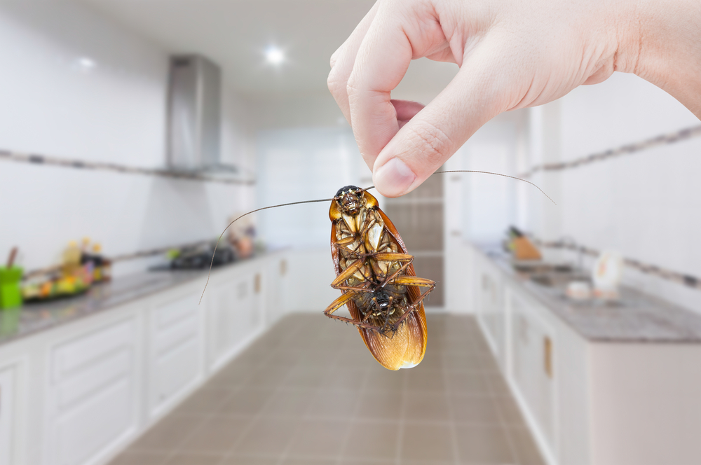 Cockroaches – They're Not Just Found in Dirty Kitchens - One Man and a Lady Bug - Pest Control Experts Calgary
