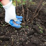 Trees – Fertilization and Soil Drenching - One Man and a Lady Bug - Pest Control Solutions Calgary