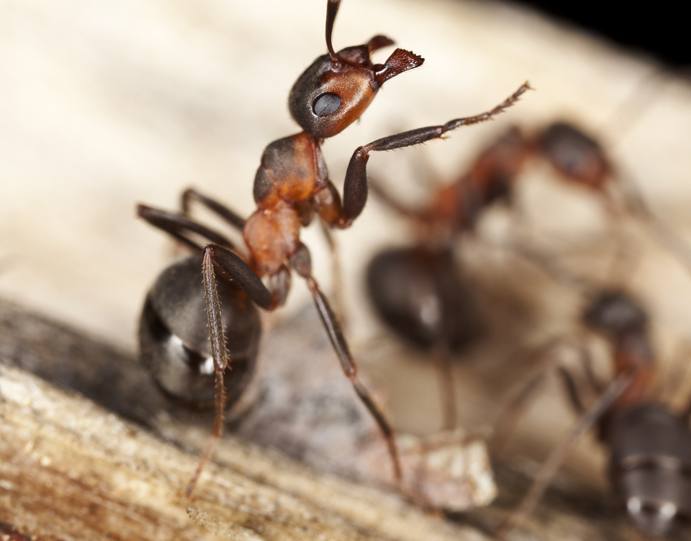 Ant Problems and How To Solve Them - One Man and a Lady Bug - Pest Control Calgary