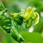 Keeping your trees bug free - One Man and a Lady Bug - Pest Control Calgary
