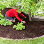 The Three Easiest Ways to Care for Your Trees - One Man and a Lady bug - Pest Control Calgary