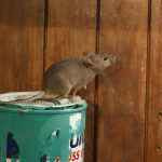 Keeping the Mouse out of the House - One Man and a Lady Bug - Pest Control Calgary