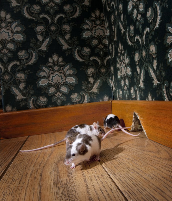 Three Common Places Mice Hide - One Man and a Lady Bug - Pest Control Calgary