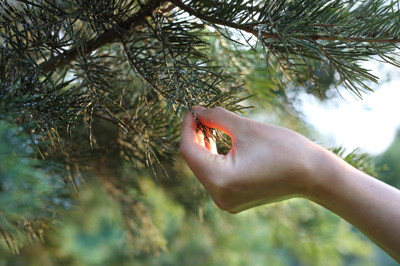 Is Your Tree Under Attack? - One Man and a Lady Bug - Pest Control in Calgary