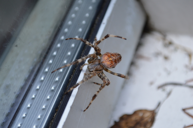 Spiders and How to Get Rid of Them - One Man and a Lady Bug - Pest Control Calgary