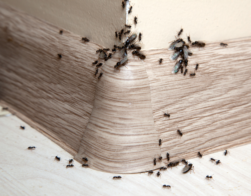 Ants in the Pantry - One Man and a Lady Bug - Pest Control Calgary
