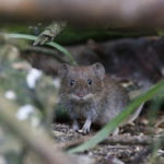 Winter is Coming! Is your House Mouse Proof? - One Man and a Lady Bug - Pest Control Calgary