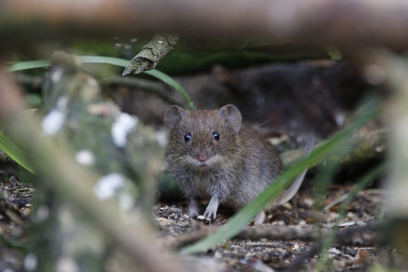 Winter is Coming! Is your House Mouse Proof? - Pest Control