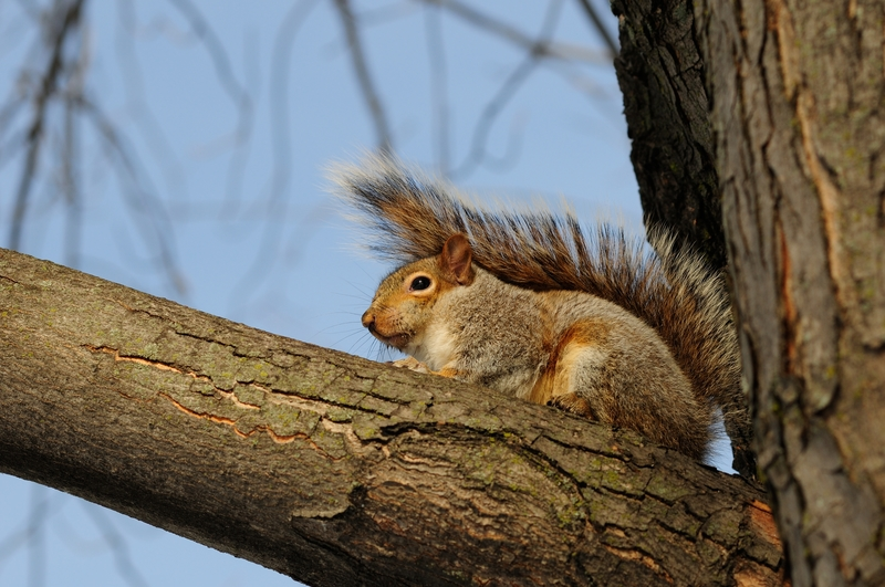 Think Squirrels are Adorable? Think Again! - One Man and a Lady Bug - Pest Control Calgary