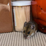 Top Three Health Hazards Mice Present - One Man and a Lady Bug - Pest Control Calgary
