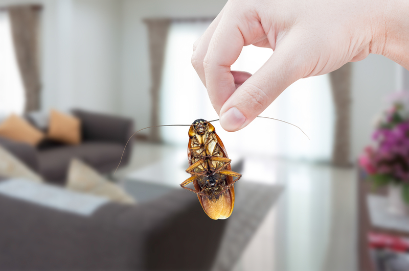 How to Prepare for Spring Pests - One Man and a Lady Bug - Pest Control Calgary