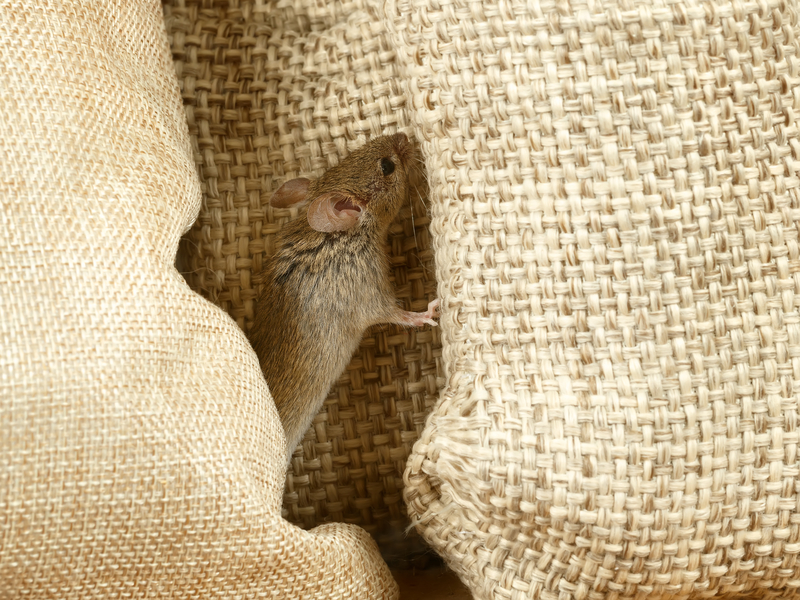 Three Ways to Keep Your House Mouse-Free - One Man and a Lady Bug - Pest Control Calgary