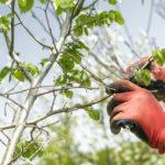 A Springtime Checklist - For Your Trees! - One Man and a Lady Bug - Pest Control Calgary