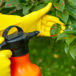 Protecting Your Trees Against Pests - One Man and a Lady Bug - Pest Control Company Calgary