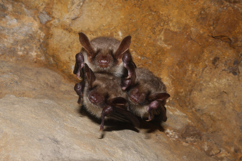 Bats: Furry Friend or Freaky Foe? - One Man and a Lady Bug - Pest Control Calgary - Featured Image
