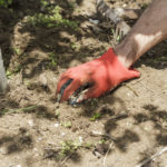 Three Tips for Summer Tree Care - One Man and a Lady Bug - Pest Control Calgary