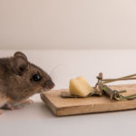 Mouse Mouse, Get Out of My House! - One Man and a Lady Bug - Pest Control Calgary - Featured Image