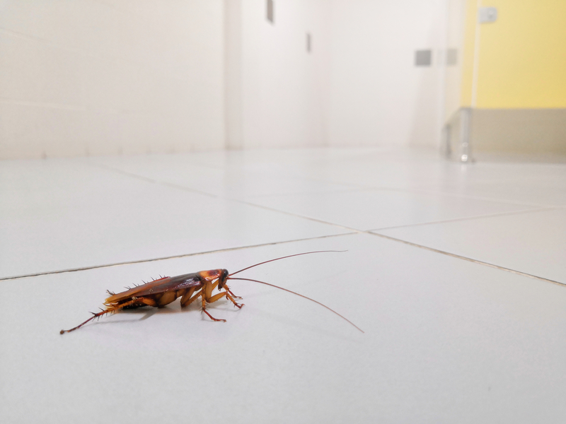 Cockroaches 101 - One Man and a Lady Bug - Pest Control Company - Featured Image