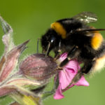 Planting for the Pollinators - One Man and a Lady Bug - Pest Control Company - Featured Image