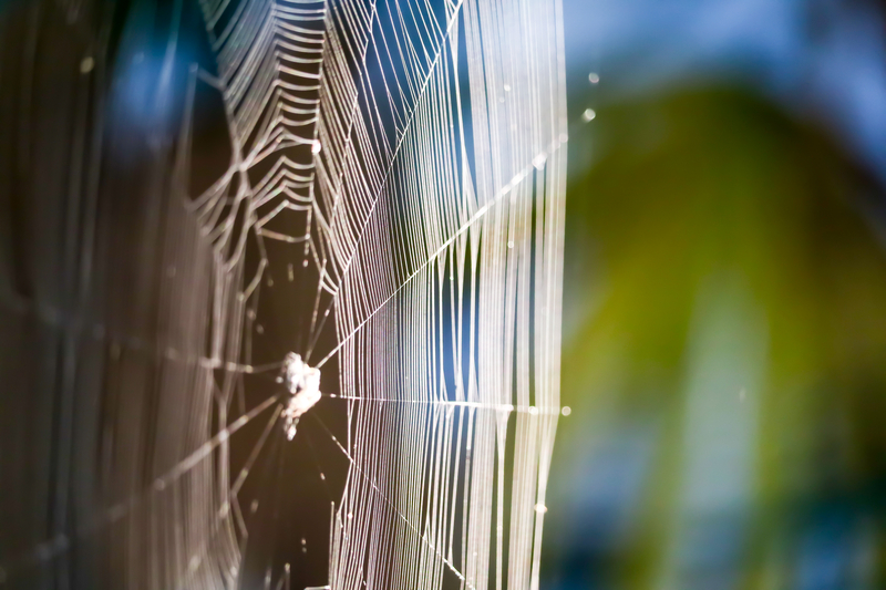Garden Spiders and How They Can Help - One Man and a Lady Bug - Pest Control Company - Featured Image