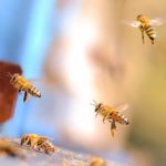 Benefiting the Bees - One Man and a Lady Bug - Pest Control Company - Featured Image