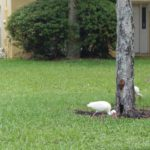 More Spring Tree Care! - One Man and a Lady Bug - Pest Control Company- Featured Image