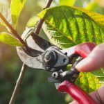protecting trees from pests