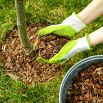 How to Protect Your Trees This Summer