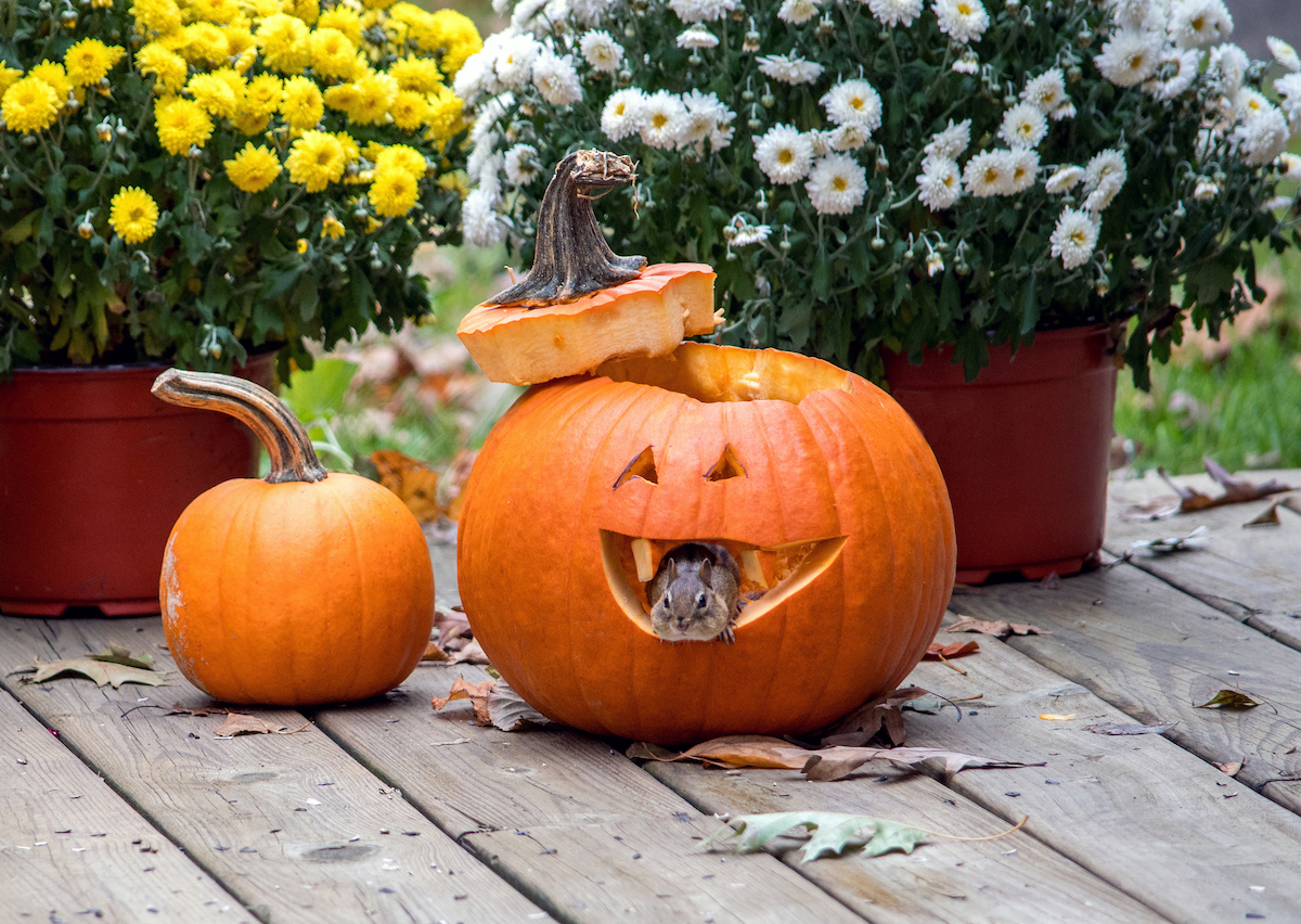 Protect Your Home from Fall Pests